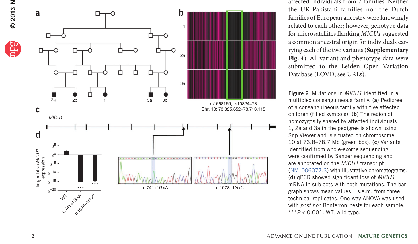 The genome assembly of human chromosome y with real snp position.